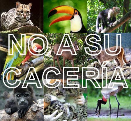 Ticovision Costa Rica