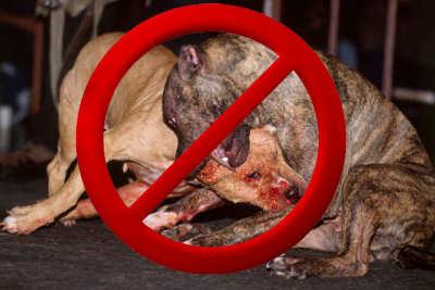 Ticovisión Costa Rica Prohibieron Las Peleas De Perros En Costa Rica